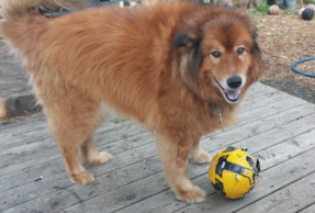 Ted loves old soccer balls and basketballs, half the fun is popping them and tearing them apart