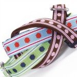 Stylish leashes and harnesses