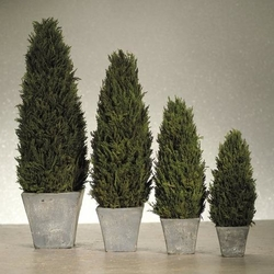 Cypress Topiary Tree