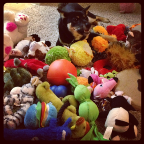 How can a spoiled pup pick just one favorite??