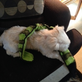 Rockie with his snake toy!